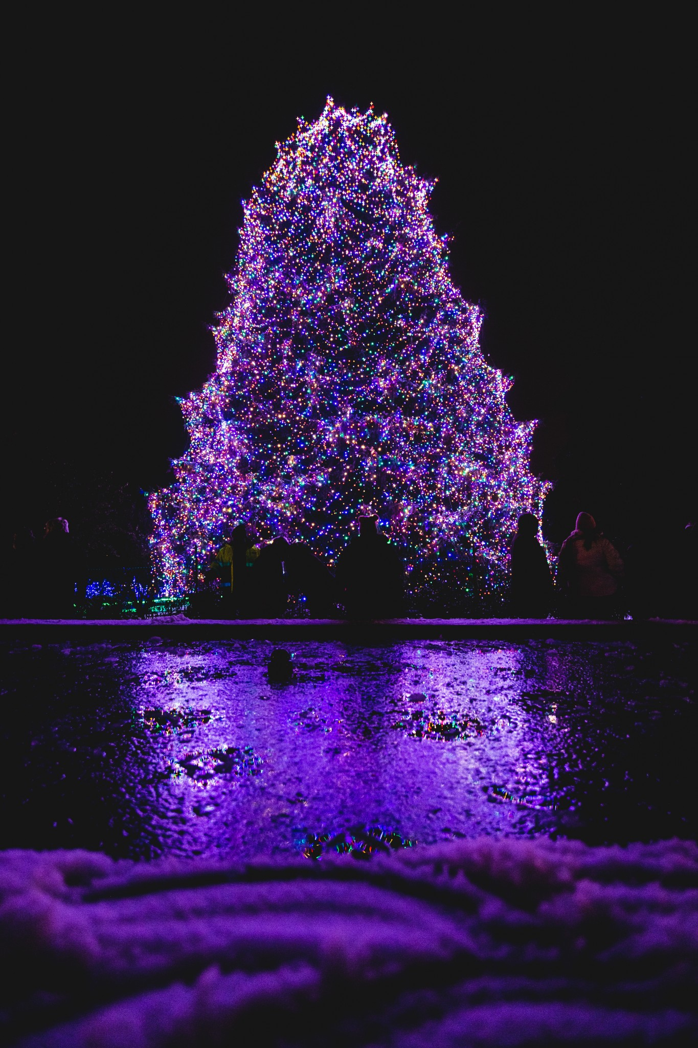 The Toledo Zoo's annual Lights Before Christmas will kick off Nov. 22 with a lighting ceremony for the Big Tree – an 85-foot Norway spruce decorated with 35,000 LED lights. The five-week long display, presented by KeyBank, features more than one million lights, more than 200 illuminated animal images and much more. (Photo courtesy of The Toledo Zoo)