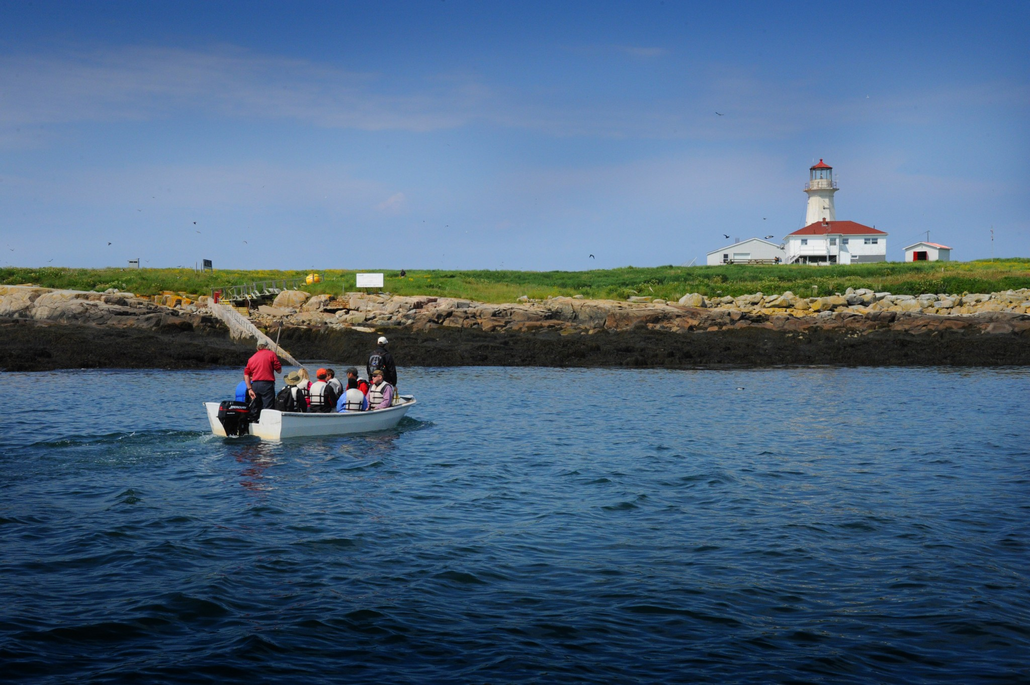 A skiff shuttles visitors to the somewhat risky landing on Machias Seal Island for a close-up look at the seabirds and their young. (Photo by Art Weber)