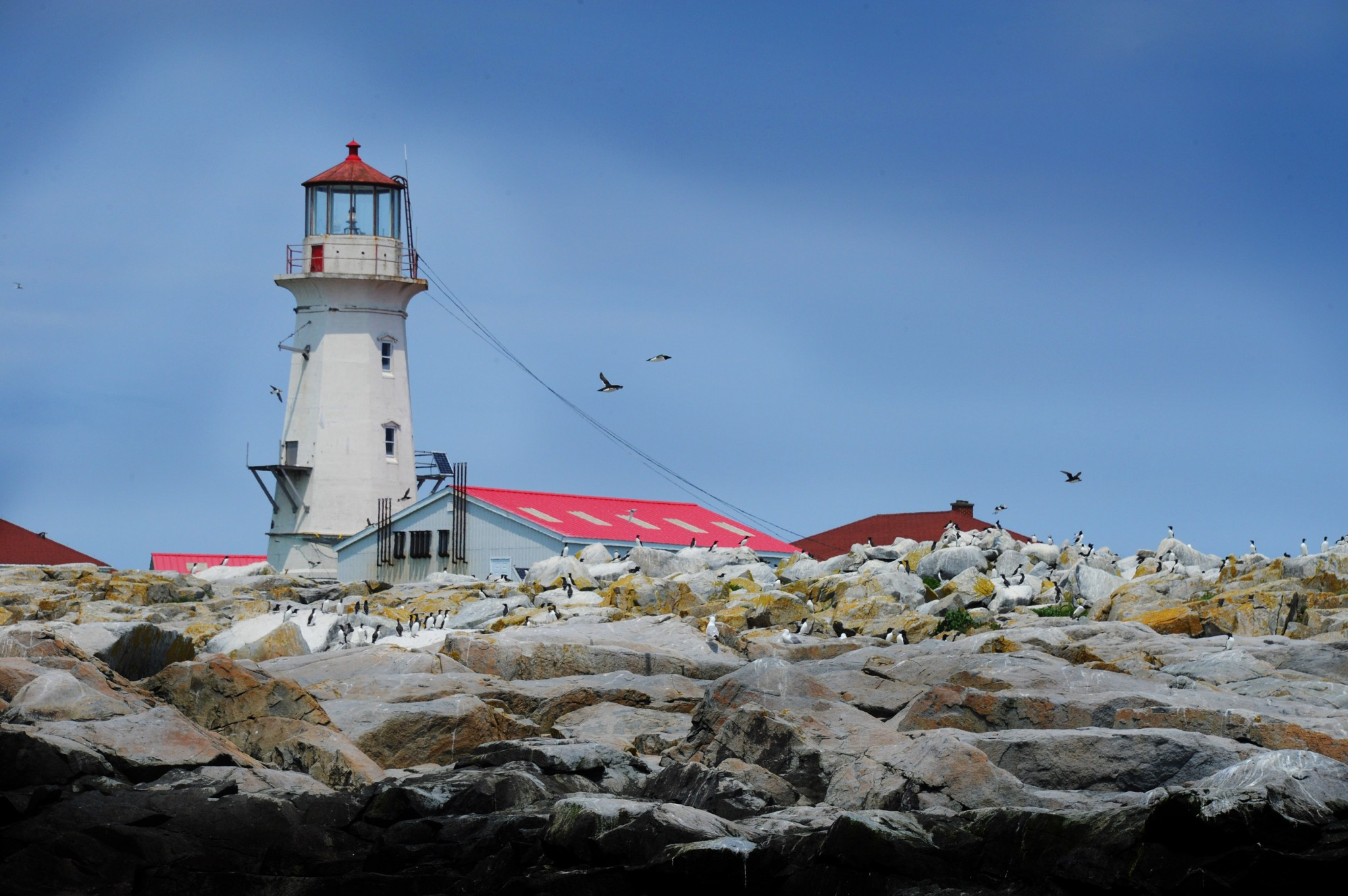 The historic Machias Seal Island light looms above the rugged rocky shore that the seabirds use. (Photo by Art Weber)