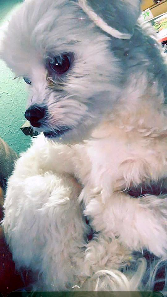 Baylee Adams' 5-year-old dog, Nikki.