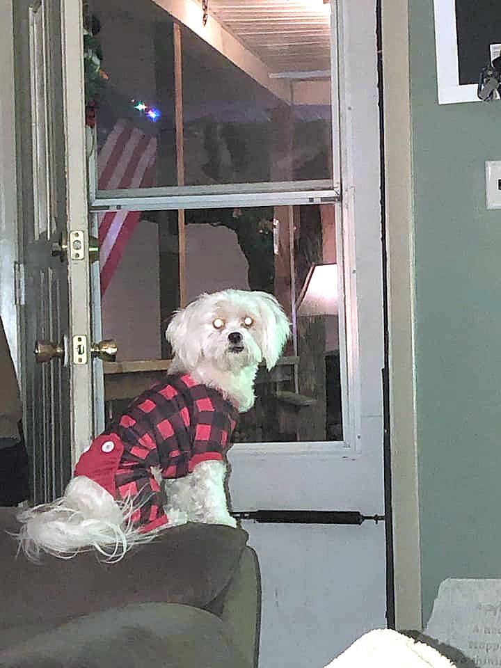Baylee Adams' 5-year old dog, Nikki.