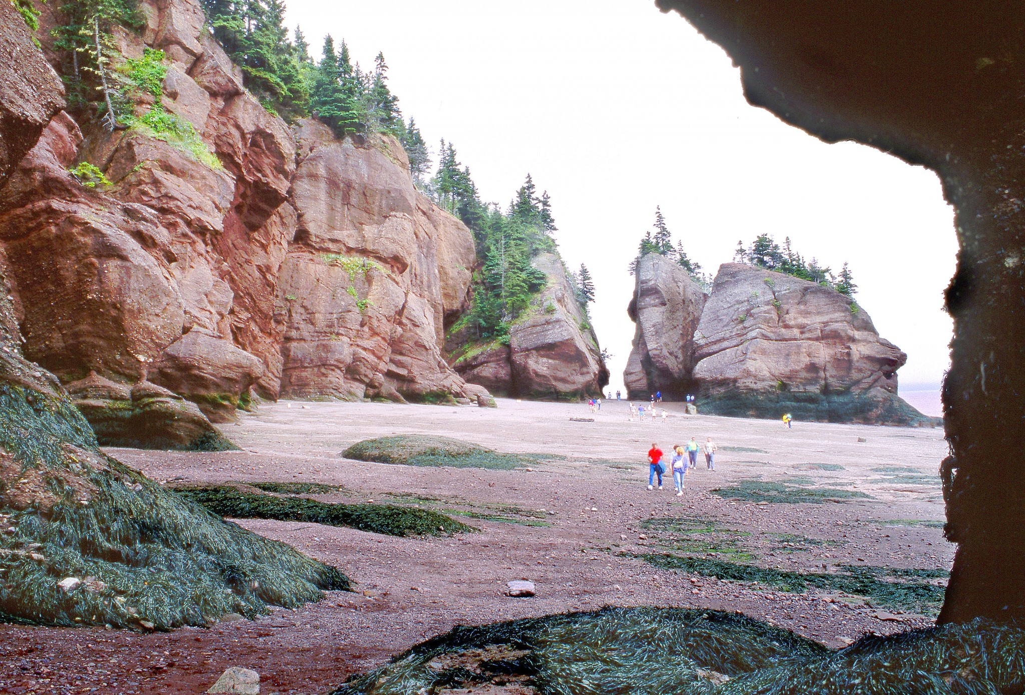The flowerpots of Hopewell Cape in New Brunswick on the Bay of Fundy are unique. This scene was captured at low tide but six hours later it was high tide and this beach was under fifty feet of water. Rocks in the foreground are covered with a seaweed called bladderwrack. (Photo by Art Weber)