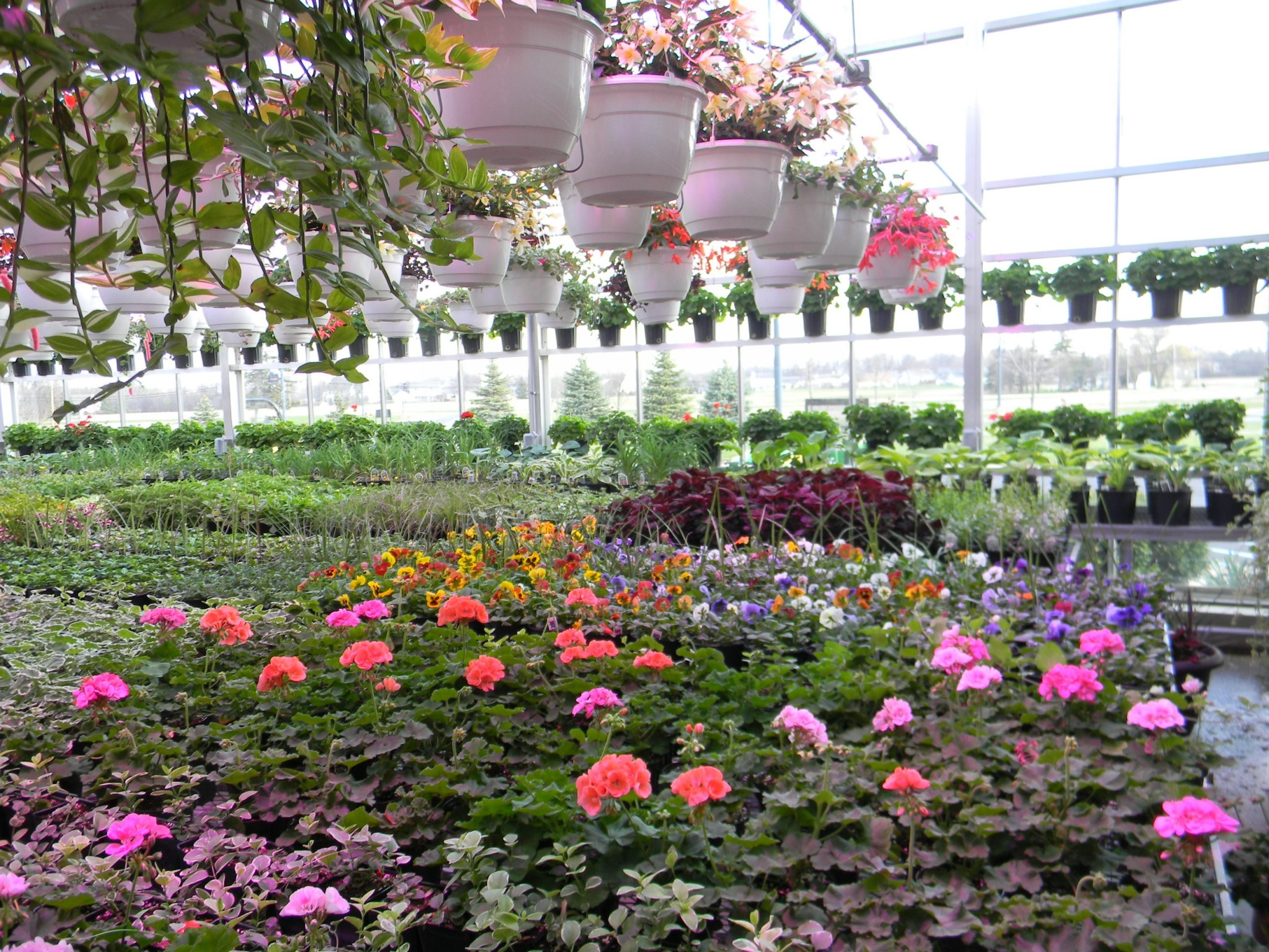 A wide variety of plants, flowers and trees will be available at Penta Career Center's FFA chapter Plant Sale April 26 from 1-5 p.m. on the school's Perrysburg Township campus. (Submitted photo)