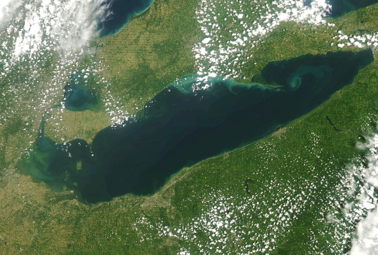 This satellite image of Lake Erie, taken on July 23, 2019, shows the start of an algal bloom. The National Atmospheric Administration (NOAA) is predicting a significant, harmful algal bloom in western Lake Erie this summer (Image courtesy of NOAA)