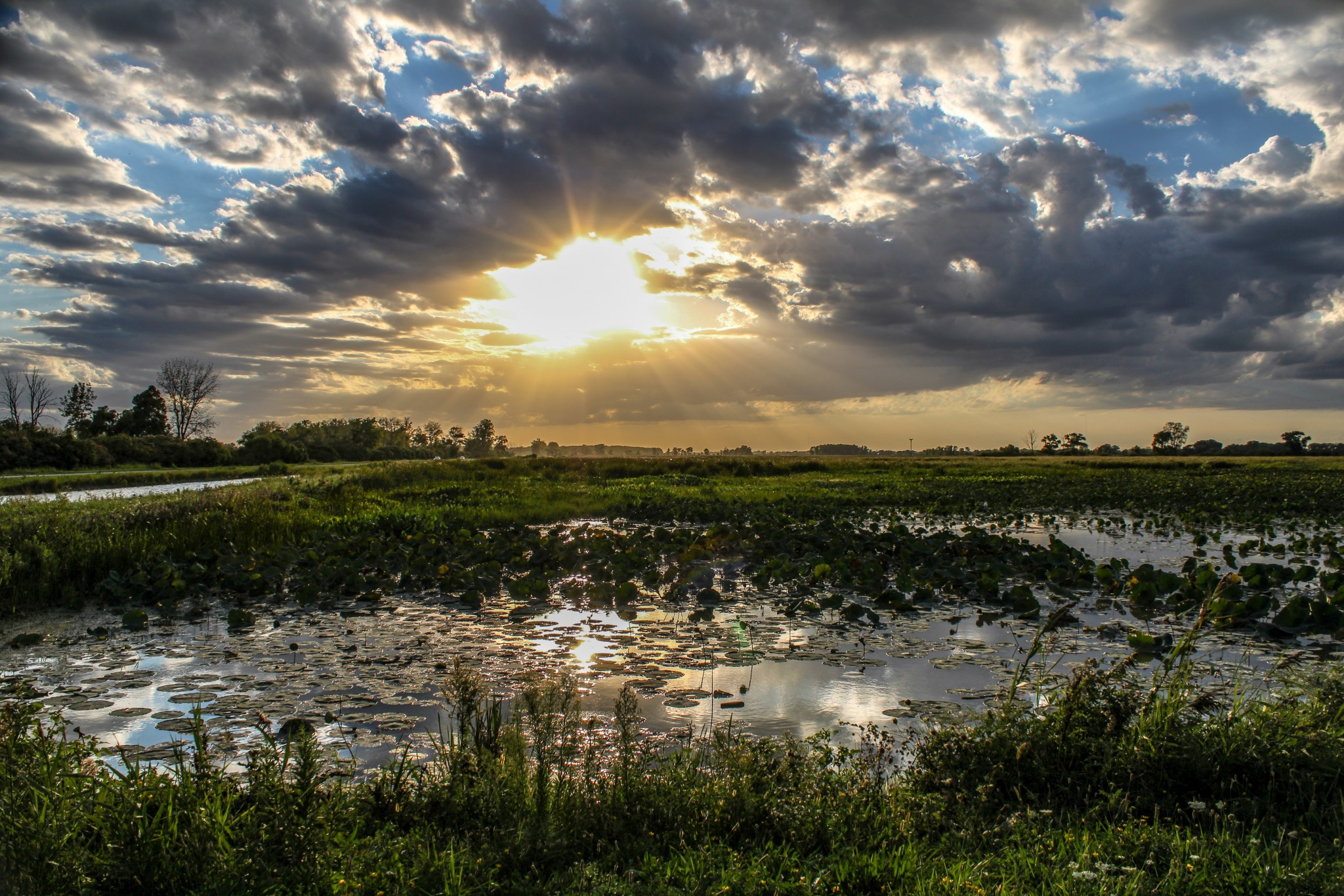 "Shelley Bennett's ""Shining Light"" earned Best of Show honors in the 2020 Ottawa National Wildlife Refuge Photo Contest. (Submitted photo)"