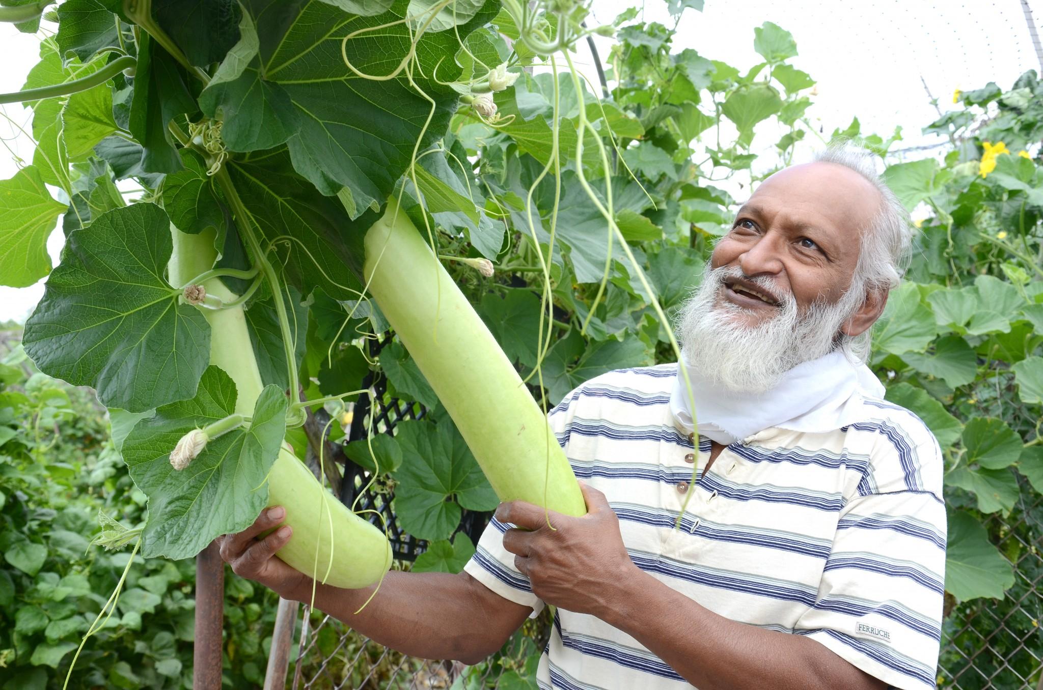 Prakash Thombre displays Bottle Gourds in his garden. (Press photo by Ken Grosjean)