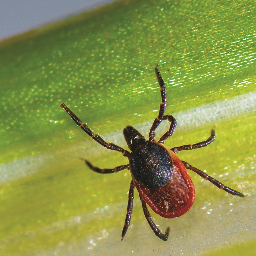 Most diseases in Ohio that are caused by the bite of infected ticks happen between spring and late fall.