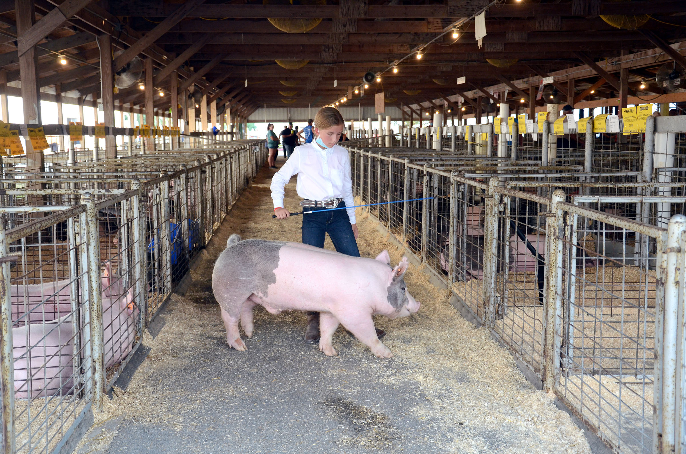Peyton Myers takes care of her brother's pig while he is at football practice. The pig was being entered in the Sandusky County Fair's junior fair. (Press photo by Ken Grosjean)