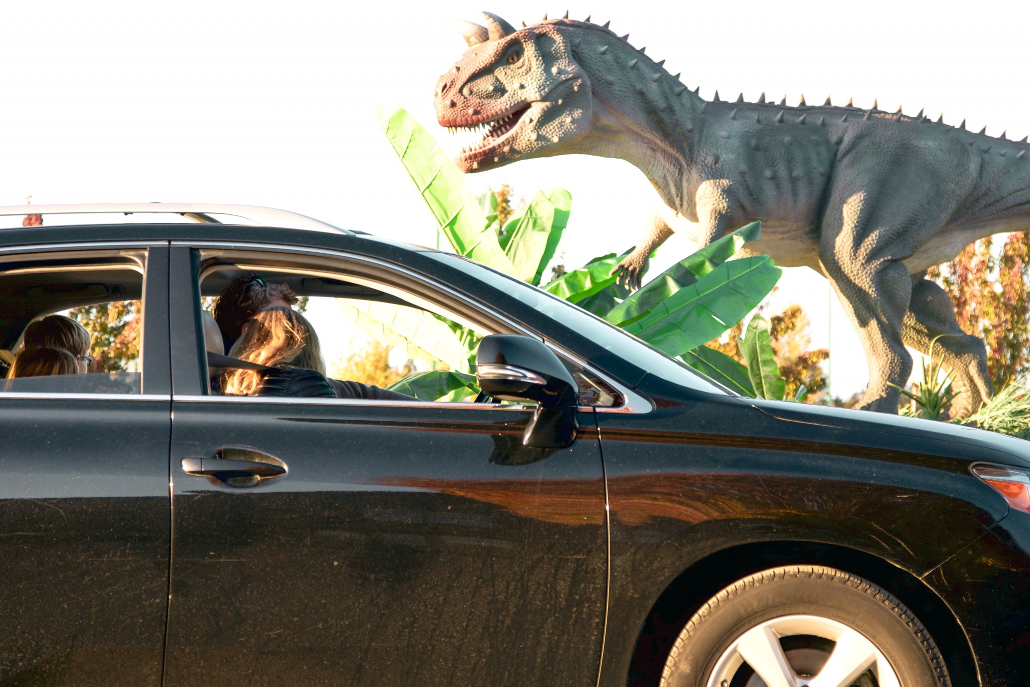 The Lucas County Fairgrounds will be transformed into a prehistoric dinosaur adventure as Dinosaur Adventure Drive-Thru roars into Toledo Aug. 7-15. (Photo courtesy of Pinnacle Production Group)