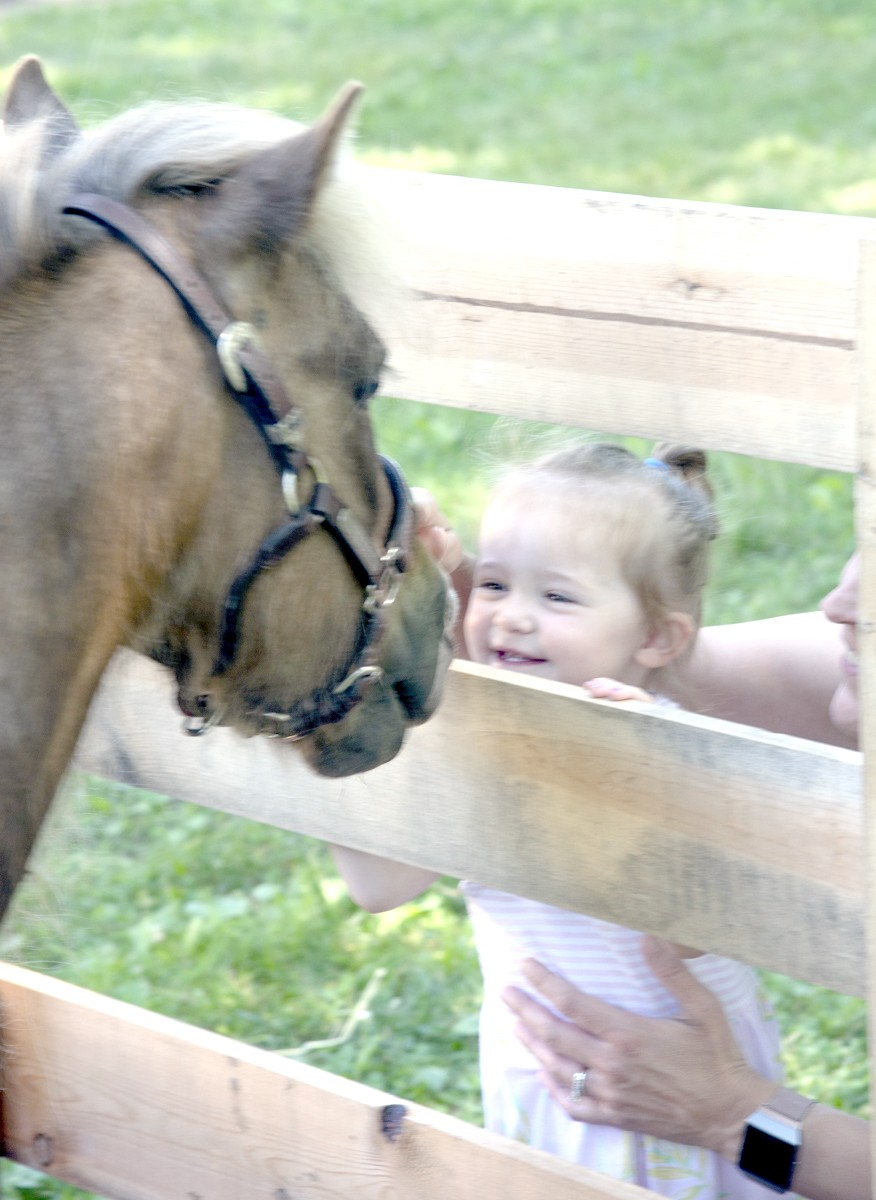 Kids will get to interact with live animals at Kids Days @ Hayes Farm Day on Saturday, July 24, at Spiegel Grove, grounds of the Hayes Presidential Library & Museums. (Submitted photo)