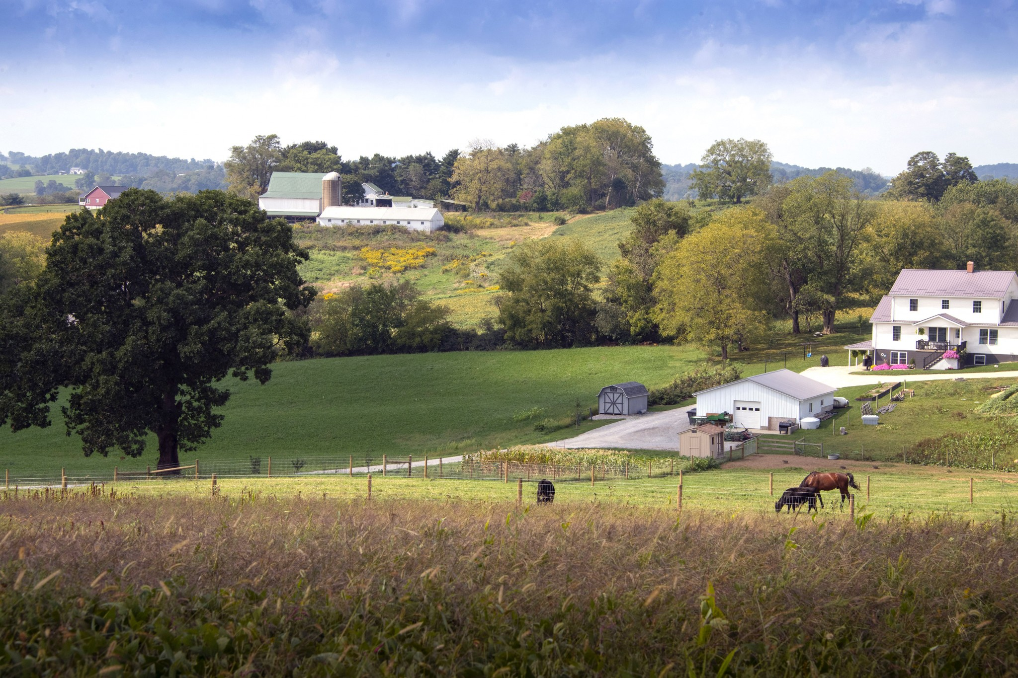 Pastoral landscapes, horse-drawn buggies, and quaint towns are trademarks of Holmes County, home to one of America's largest Amish communities. (Photo by Art Weber)