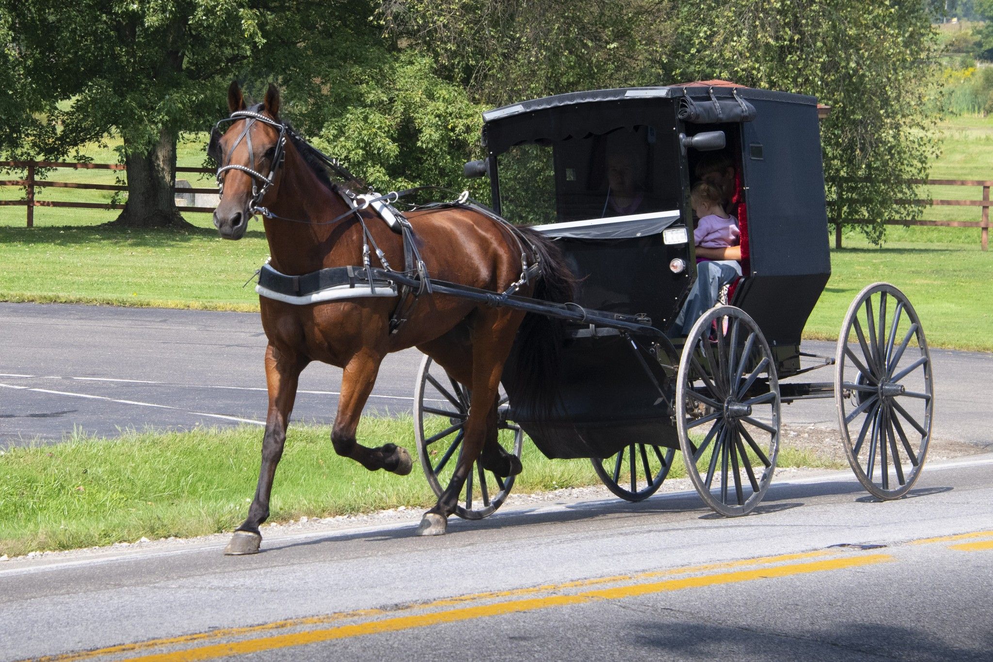 An Amish buggy shares a roadway on a rural road near Millersburg. (Photo by Art Weber)