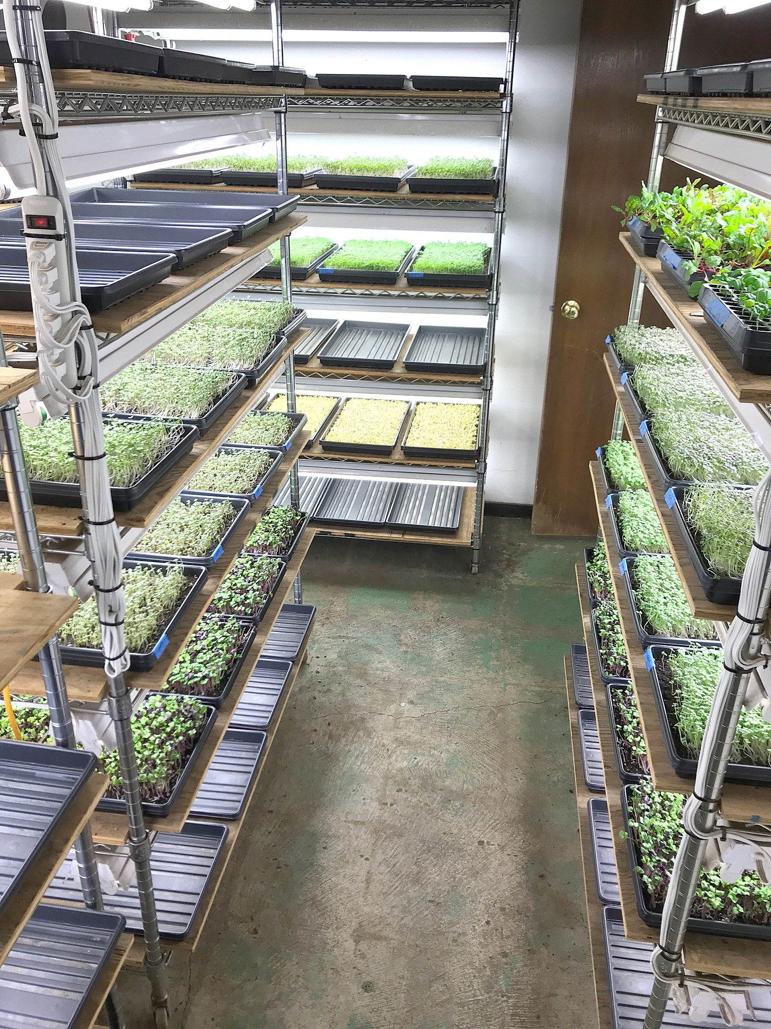 Walbridge native Drew Sample started Capital City Greens, a Columbus-based urban farm in the spring of 2016. His microgreens are available locally at Lee Williams House of Meats in Oregon and at Walt Churchill's Market. (Submitted photo)